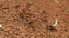 Butterflies - Iguasu, Argentina - stock footage