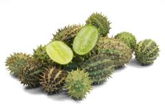 prickly cucumber fruits - stock photo