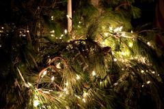 Christmas Display Pine - stock photo