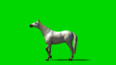 White horse in motion - animal green screen footage Stock Footage