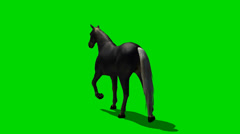 Black horse trab green screen footage Stock Footage