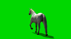 White horse trab - animal green screen footage Stock Footage
