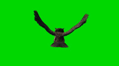 Owl in fly green screen footage Stock Footage