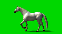 Stock Video Footage of white horse trab - animal green screen footage