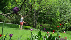 Girl in shorts water garden and colorful tulip heads grow - stock footage