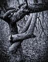 Stock Illustration of Gothic Tree