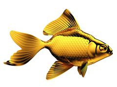Stock Illustration of goldfish with fins and scales isolated