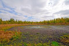 Weland bog in the midwest Stock Photos