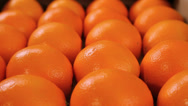 Stock Video Footage of Oranges