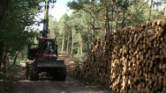 Stock Video Footage of stacking timber along sand path in forest with logging forwarder - medium shot