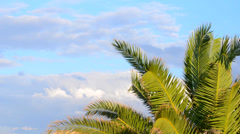 Palms and clouds Stock Footage