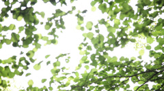 Unfocused leaves Stock Footage