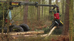Stock Video Footage of Tree cutter : Timber Logging Havester : Skidder, (Shot at 50fps)