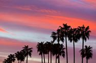 Stock Photo of palm tree silhouettes on sunset sky background