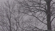 Stock Video Footage of Trees, Snow, Snowfall, Winter