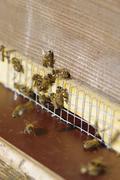 Beehive bee hives Stock Photos