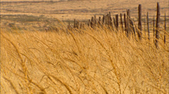 High Desert Grass Fence Stock Footage