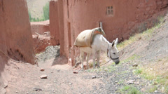 Donkey at Abyaneh historical village. Iran. Stock Footage