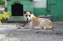 Dog next to a booth Stock Photos