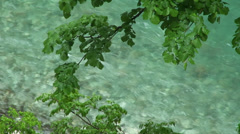 Branches with greenish river water Stock Footage