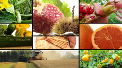 Harvest and agricultural products Stock Footage