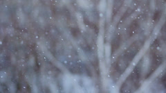 Winter Scene Snow Falling on Trees HD Stock Footage
