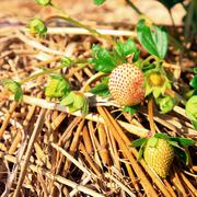 Stock Photo of stawberries