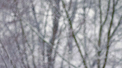 Winter Snowfall with Trees HD Stock Footage