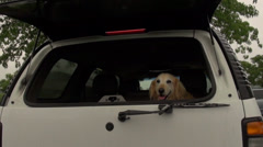 Panting dog in car Stock Footage