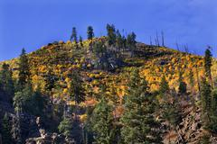 yellow trees mountain fall colors stevens pass leavenworth washi - stock photo
