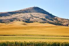 steptoe butte yellow green wheat field blue skies palouse washington state - stock photo