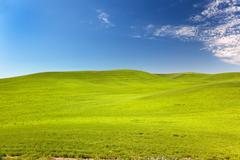 Stock Photo of green wheat grass blue skies palouse washington state