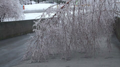 Damaged tree after an ice storm Stock Footage