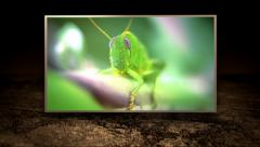 Diverse insects montage over ground texture Stock Footage