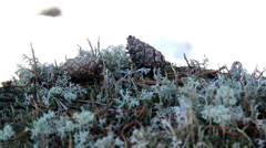 Some pine cones found on the ground Stock Footage