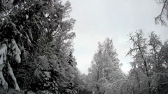 Tall trees on the roadside covered with snow Stock Footage