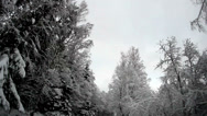Stock Video Footage of tall trees on the roadside covered with snow