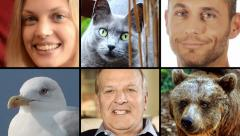 Human people and animals portraits. Close-ups. Collage. Stock Footage