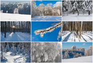 Stock Illustration of Winter forest