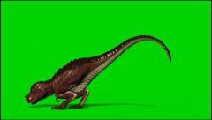 Dinosaur Tyrannosaurus T-Rex dies and falls to the floor - isolated green screen Stock Footage