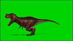 Dinosaur Tyrannosaurus T-Rex roars - green screen  - stock footage