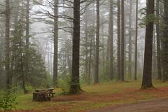 Adirondack Campground Fog Stock Photos