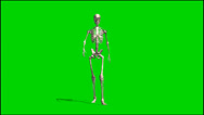 Stock Video Footage of skeleton goes - isolated green screen footage