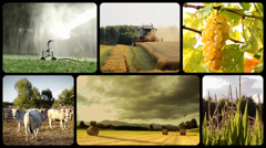 Farming. People working in countryside, collage Stock Footage