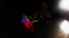 Rose Burning With Blue Flame And Dark Backround Stock Footage