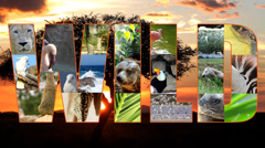 Wild collage Stock Footage
