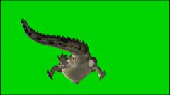Krokotiili ui - eristetty animal green screen kuvamateriaalia Arkistovideo