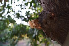 Fossilized Cicadas - stock photo