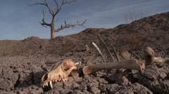 Drought Bones Dead Tree Stock Footage