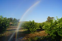 Rainbow In The Field Stock Photos